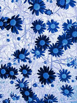 Sandra Foster - Blue Mystical Daisies