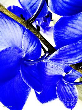 Nancy Stein - Blue Orchid 2