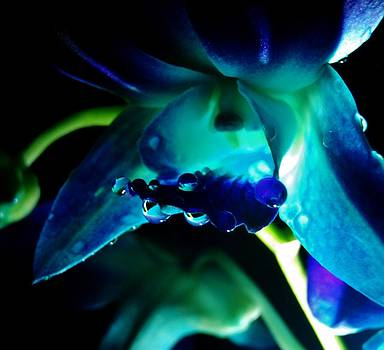 Sarah Pemberton - Blue Orchid two