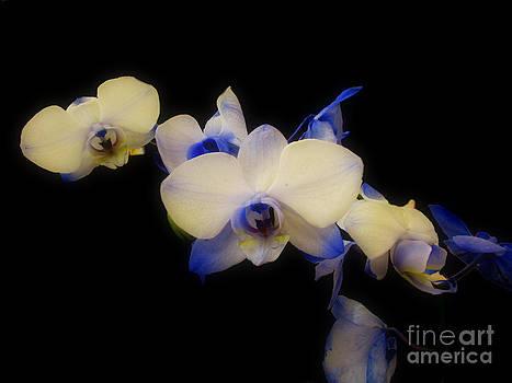 Scott B Bennett - Blue orchids