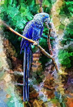 Blue Parrot by Brandon Batie
