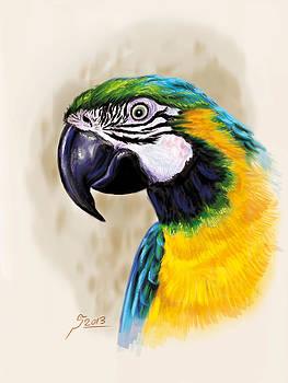 Blue Parrot by Reza Daliloltejari