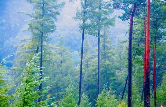 Jenny Rainbow - Blue Pine Forest