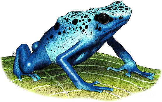 Roger Hall - Blue Poison Dart Frog
