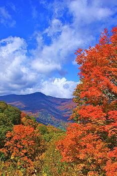 Blue Ridge Foliage by Mountains to the Sea Photo