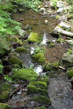 Blue Ridge Mountain Stream 2 by Kelly Youngblood