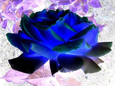 Blue Rose by Will Borden