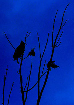 Blue Silhouette by Julie Cameron