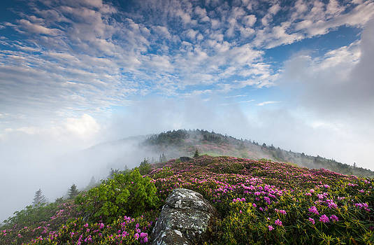 Blue Skies Above Catawba Rhododendron in the Roan Mountain Highlands by Mark VanDyke