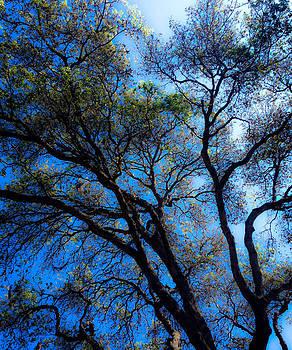 Blue Skies by Alyson Innes