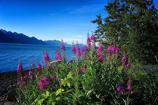 Blue Skies Seward Alaska by Michael Rogers