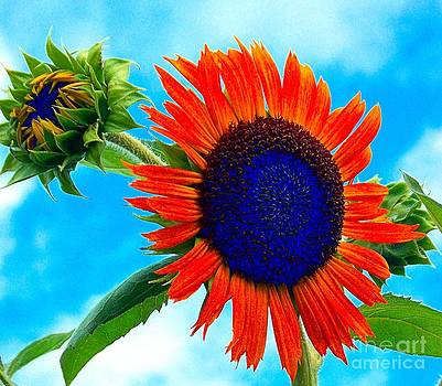 Blue Sky Flower by Annette Allman