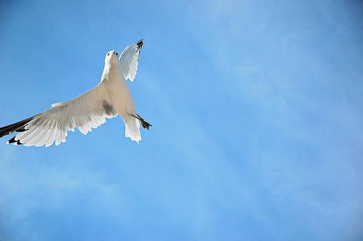 Blue Sky Grace by Hans Castleberg