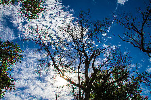Blue Sky today by Brian Williamson