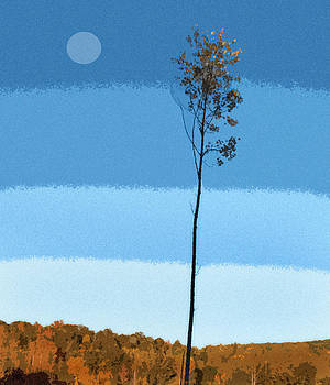 Blue Sky Tree by Pam Clark