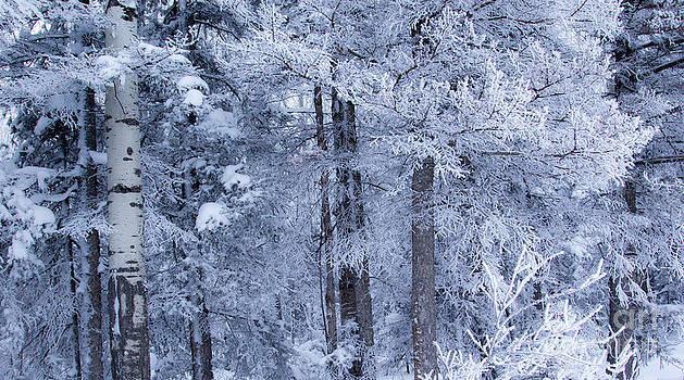 Alanna DPhoto - Blue Snowy Day