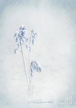Blue Softness by Gouzel -