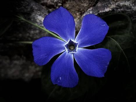 Blue Spiral by Frederick R