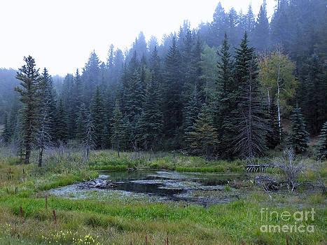 Blue Spruce Mist by David Pettit