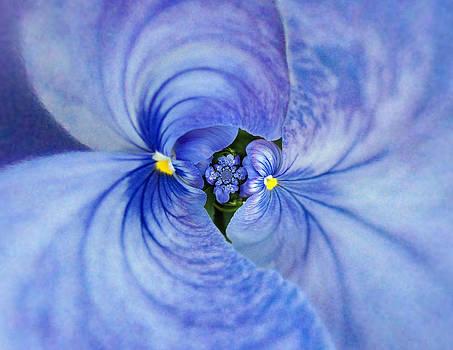 Marty Koch - Blue Twins