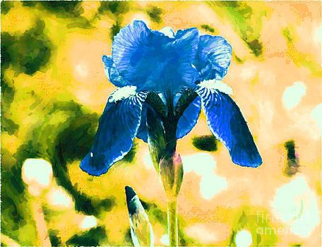 Blue Velvet by Pamela Rivera