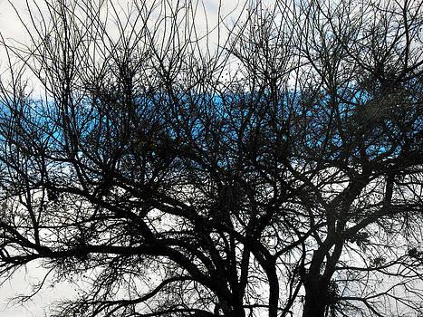 Blue Window by Ross Odom