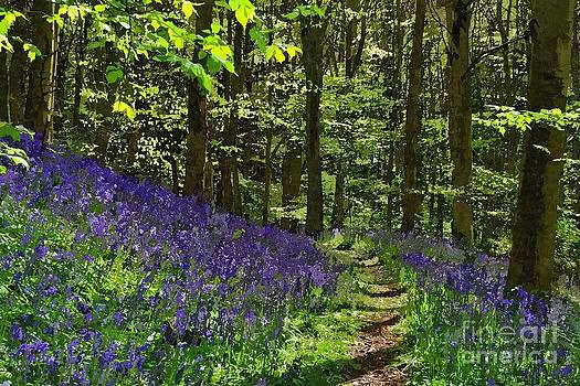 Bluebell Woods Photo Art by Les Bell