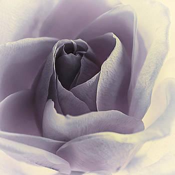 Blueberries n Cream by Darlene Kwiatkowski