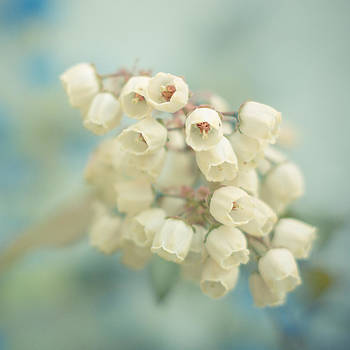 Blueberry Blossoms - Darling Buds of May by Sarah Beth Smith
