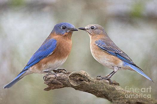Bluebird Boy Bluebird Girl by Bonnie Barry