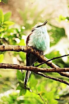 Bluebird by Emily Fidler