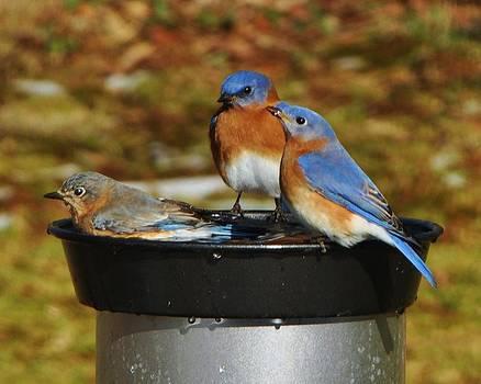 Bluebird Hot Tub by William Fox
