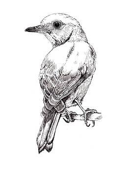 Bluebird by Tanya Hamell