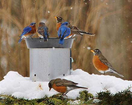 Bluebirds and Robins by William Fox
