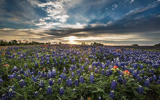 Bluebonnet Heaven by Chris Multop