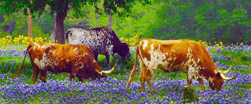BLUEBONNET LUNCH looks like a painting by Jerry Moffett