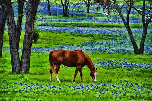 Bluebonnet Meadow by Jeff R Clow