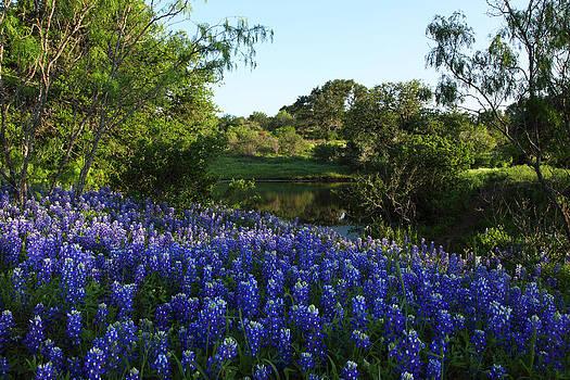 Susan Rovira - Bluebonnets by the Pond
