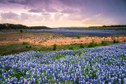 Ellie Teramoto - Bluebonnets on the Colorado River Bank - wildflower field in Texas
