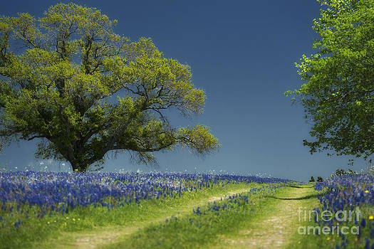 Bluebonnets Road Trees by Richard Mason
