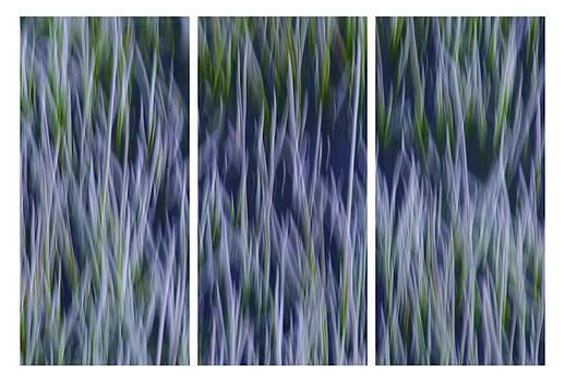 Bluegrass Triptych by Sherri Meyer