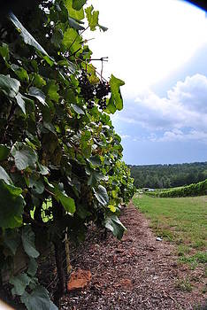 Pamela Smale Williams - BLUES FROM A THUNDERCLOUD VINEYARD