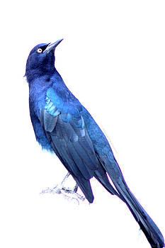 Bluish Bird by DerekTXFactor Creative