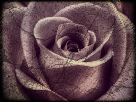 Blush by Deborah Knolle