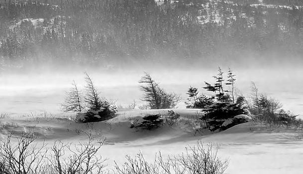 Blustery Barrens by Jim Hart