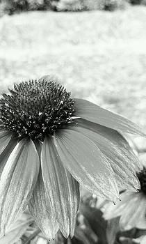 BnW Flower by Courtnee Epps
