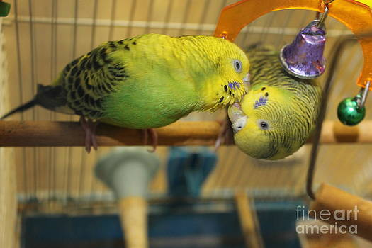 Bo and Peep the Budgies Upside Down Kiss by Erin Masterson