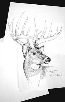 Bo-Buck by Gino Carrier