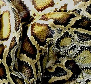 Gail Matthews - Boa Constrictor Snake Skin