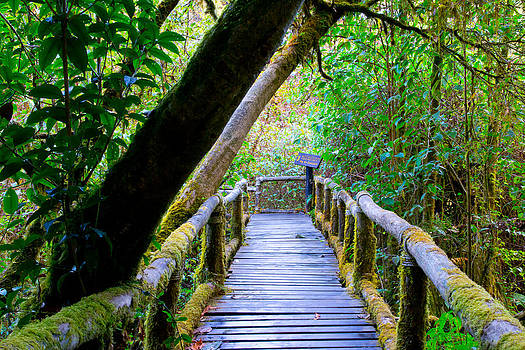 Boardwalk In Forest  by Kobchai Sukruean